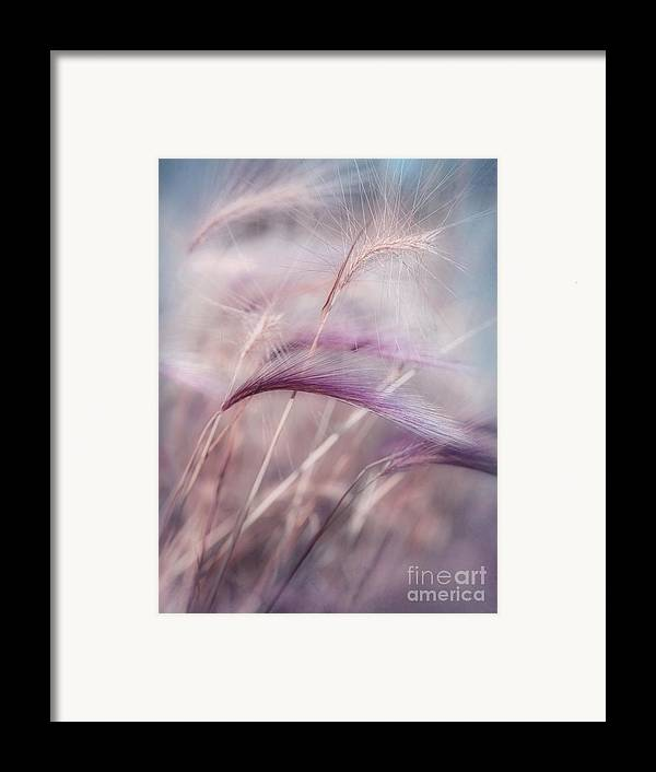 Barley Framed Print featuring the photograph Whispers In The Wind by Priska Wettstein