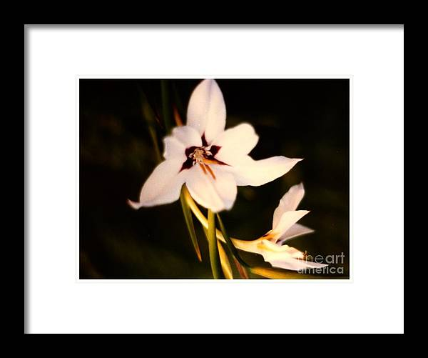 White Framed Print featuring the photograph White And Purple Lily by Debra Lynch