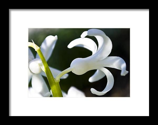 Beautiful Framed Print featuring the photograph White Bell by Svetlana Sewell