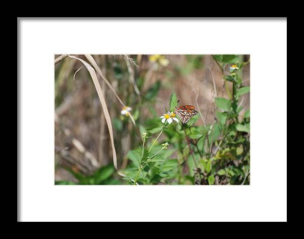 Butterfly Framed Print featuring the photograph White Butterfly by Rob Hans