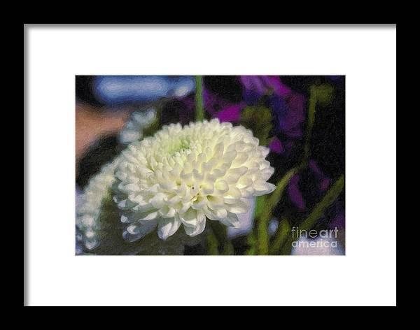 White Chrysanthemum Flower Beautiful Mum Framed Print featuring the photograph White Chrysanthemum Flower by David Zanzinger