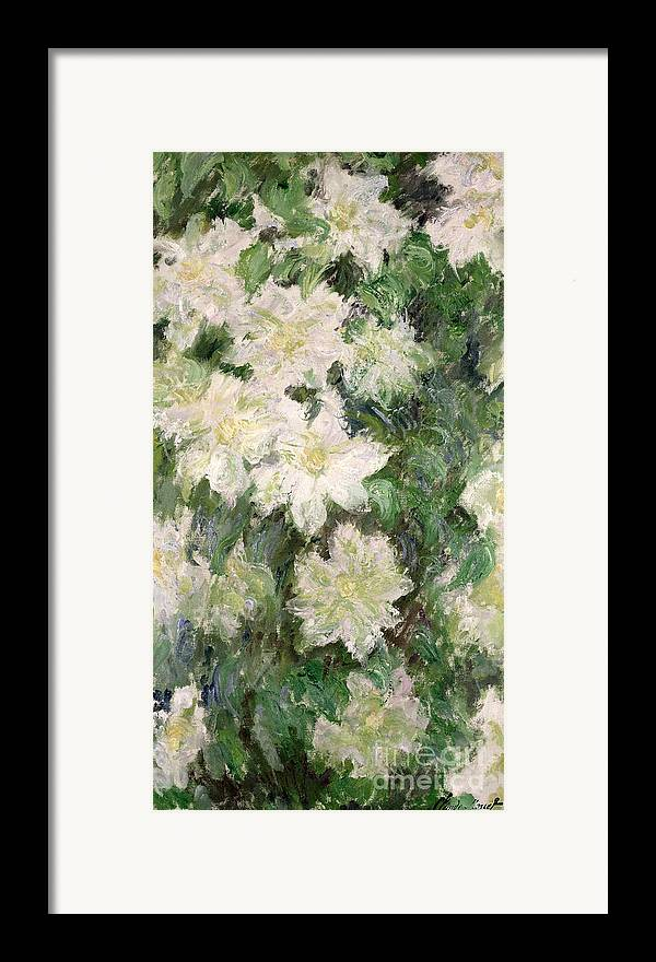 White Clematis Framed Print featuring the painting White Clematis by Claude Monet