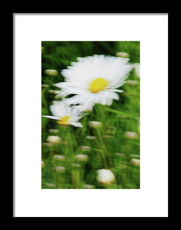 White Daisy Framed Print featuring the photograph White Daisy Digital Oil Painting by Vishwanath Bhat