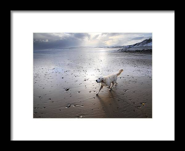 Aqua Framed Print featuring the photograph White Dog by Svetlana Sewell