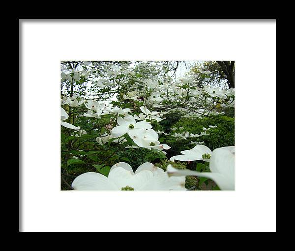 Dogwood Framed Print featuring the photograph White Dogwood Flowers 6 Dogwood Tree Flowers Art Prints Baslee Troutman by Baslee Troutman