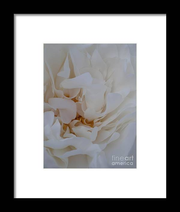 Flower Framed Print featuring the photograph White Dreams by Valia Bradshaw