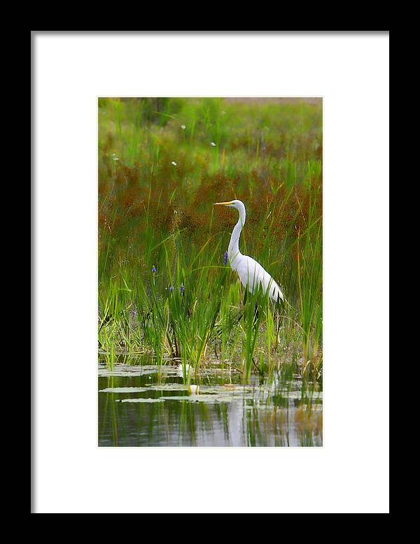 Bird Egret White Florida Swamp Pond Photograph Photography Framed Print featuring the photograph White Egret In Waiting by Shari Jardina