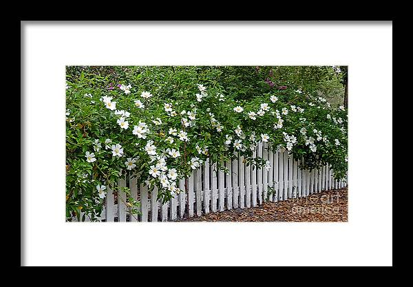 White Framed Print featuring the photograph White Picket Fence by Linda Vodzak
