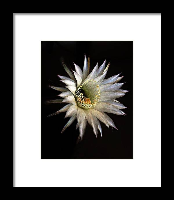 Flowers Framed Print featuring the photograph White Fire by Richard Gordon