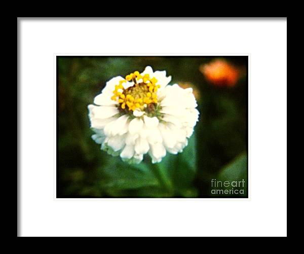 White Framed Print featuring the photograph White Flower by Debra Lynch