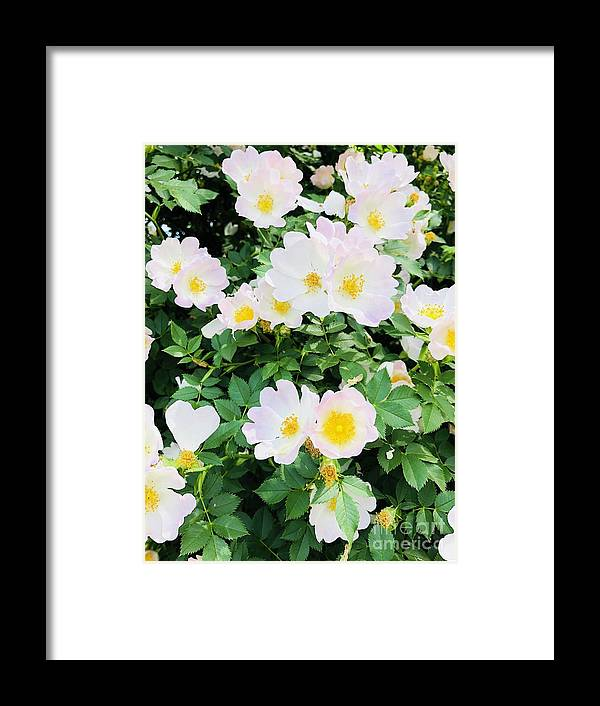 Flowers Framed Print featuring the photograph White Flower by Ronalyn Ferrer