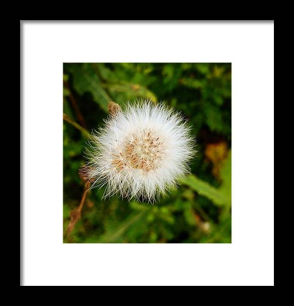White Flower Framed Print featuring the photograph White Flower by Sandeep Kumar Dogra