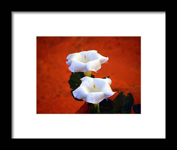 Flowers Framed Print featuring the photograph White Flowers by Carrie Putz