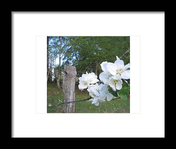 Flowers Framed Print featuring the photograph White Flowers by Valerie Josi