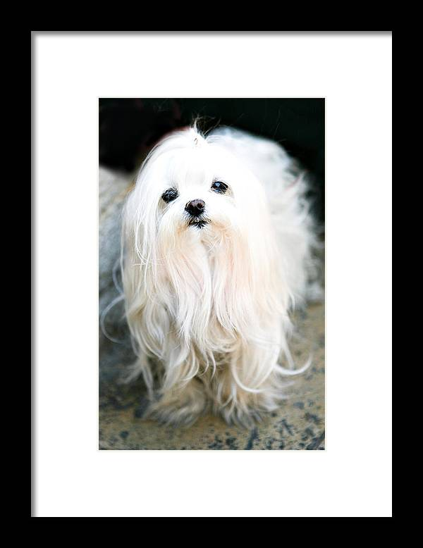 Small Framed Print featuring the photograph White Fluff by Marilyn Hunt