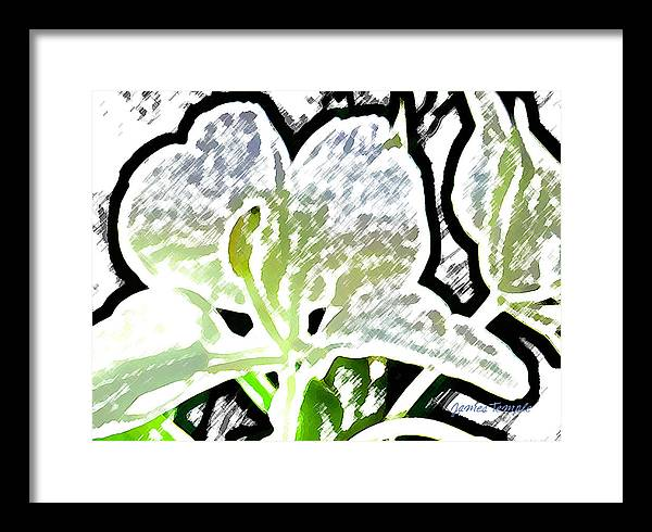 Ginger Framed Print featuring the digital art White Ginger by James Temple