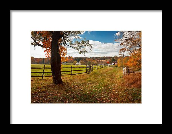 Horse Framed Print featuring the photograph White Horse Grazing by David Lamb