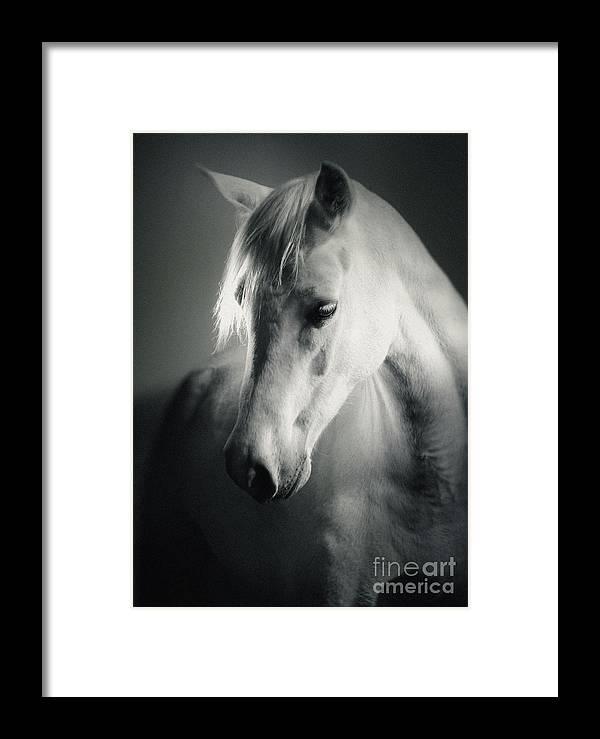 bd7082c4ab7 White Horse Head Art Portrait Framed Print by Dimitar Hristov