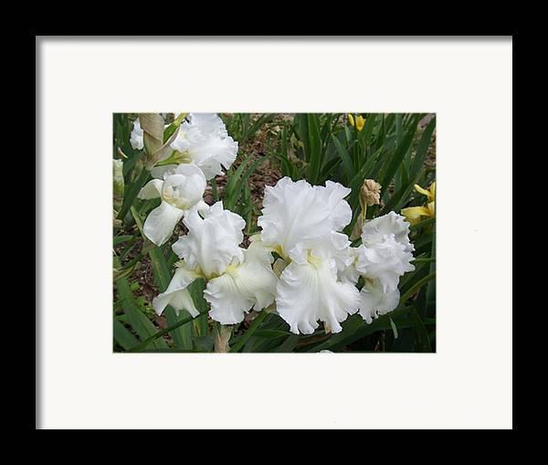 Flower Framed Print featuring the photograph White Iris by Ellen B Pate