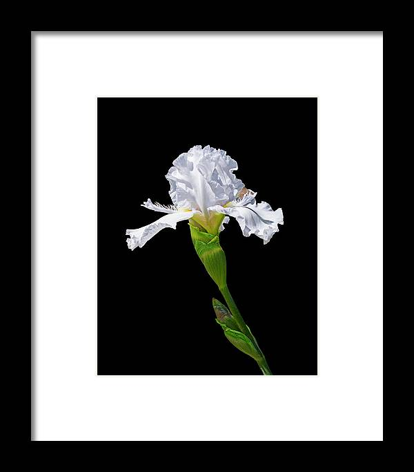 Framed Print featuring the photograph White Iris On Black Background by Lowell Monke