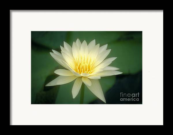 Anther Framed Print featuring the photograph White Lily by Ron Dahlquist - Printscapes