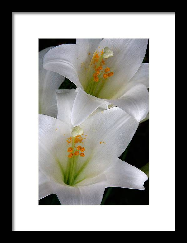 Flower Framed Print featuring the photograph White Lily by Ron Murray