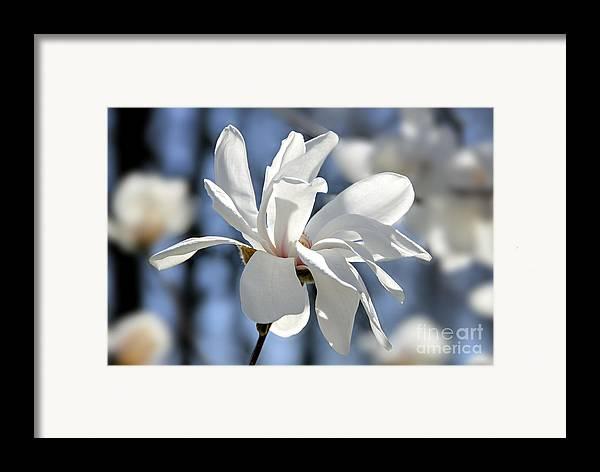 Magnolia Framed Print featuring the photograph White Magnolia by Elena Elisseeva