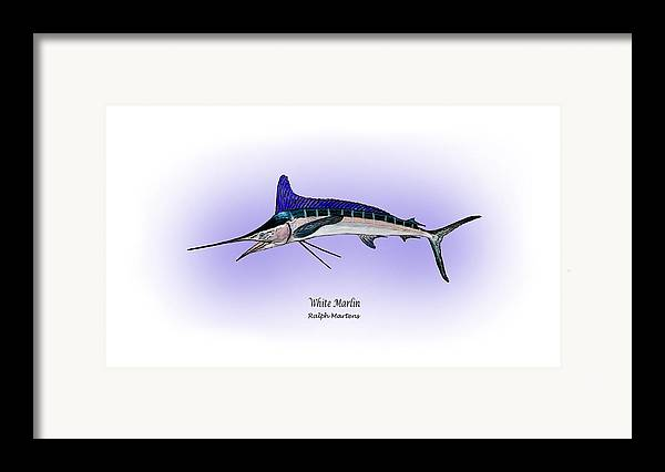 White Marlin Framed Print featuring the painting White Marlin by Ralph Martens