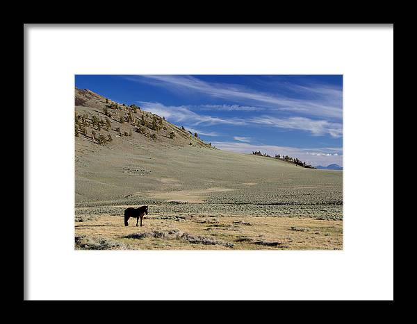 Framed Print featuring the photograph White Mountain Horse by Eric Rosenwald