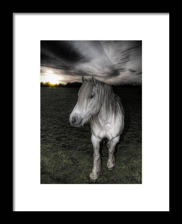 Horse Framed Print featuring the photograph White Night by Fraser Davidson
