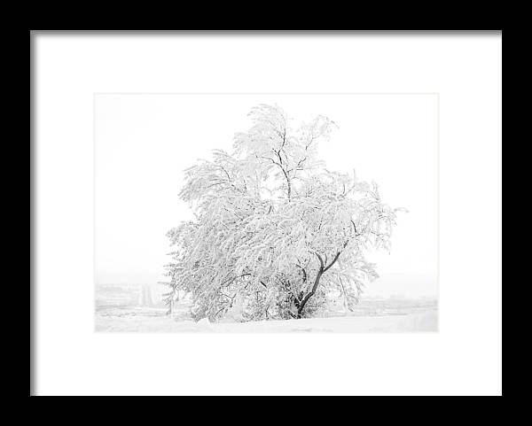 Snow Framed Print featuring the photograph White On White by Marilyn Hunt
