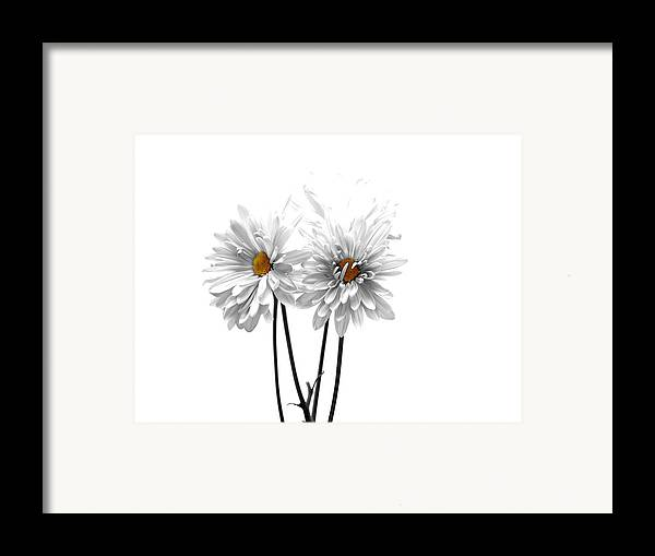 White Framed Print featuring the photograph White On White by Regina Arnold