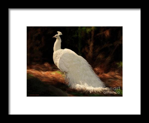 Peacock Framed Print featuring the painting White Peacock In Golden Hour by Constance Woods