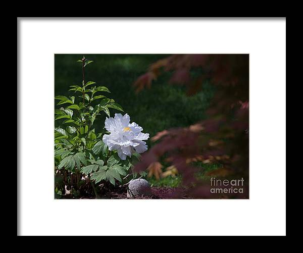 White Framed Print featuring the photograph White Peony by David Bearden
