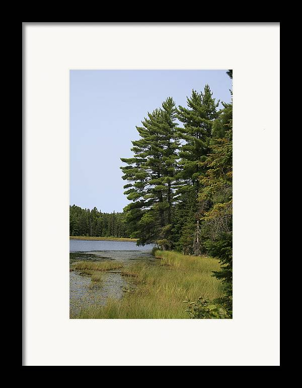 Landscape Framed Print featuring the photograph White Pines by Alan Rutherford