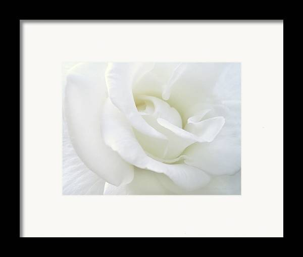 Rose Framed Print featuring the photograph White Rose Angel Wings by Jennie Marie Schell