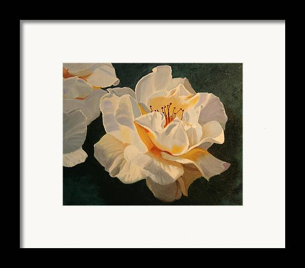 Floral Framed Print featuring the painting White Rose by Robert Tower
