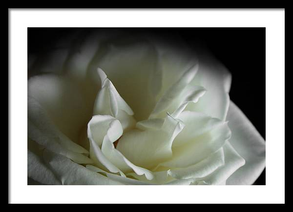 Rose Framed Print featuring the photograph White Rose by Sally Engdahl