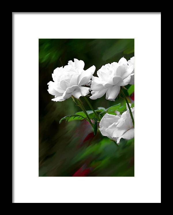 Rose Framed Print featuring the photograph White Roses by Jim Darnall