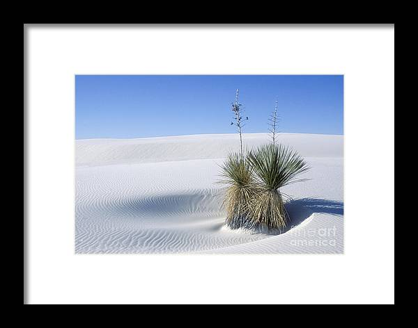 White Sands Framed Print featuring the photograph White Sands Dune And Yuccas by Sandra Bronstein