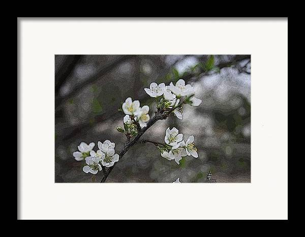 Flowers Framed Print featuring the photograph White Simplicity by Janey Loree