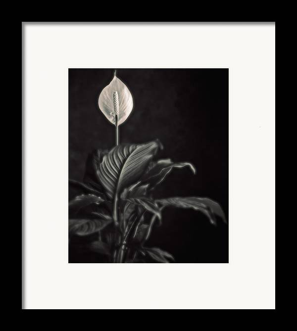 Flora Framed Print featuring the photograph White Skunk Cabbage by Joseph Gerges