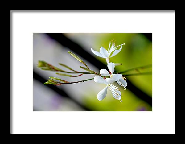 White-flowers Framed Print featuring the photograph White Stem Flowers by Reva Steenbergen