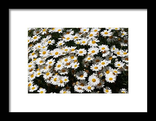 White Framed Print featuring the photograph White Summer Daisies by Christine Till