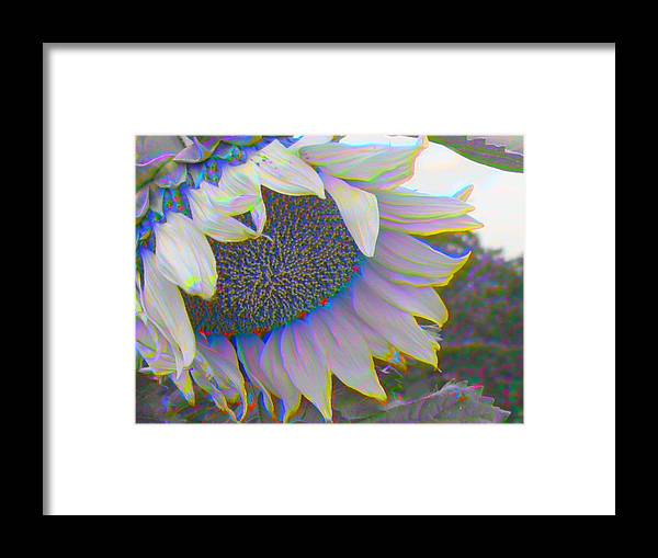 Landscape Framed Print featuring the photograph White Sunflower by Vicky Brago-Mitchell