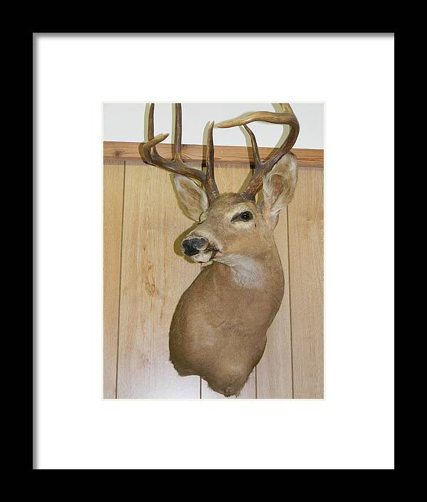 White Tail Buck Framed Print featuring the photograph White Tail Buck by Warren Thompson