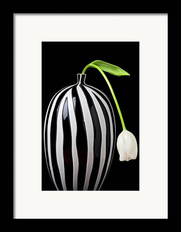 White Framed Print featuring the photograph White Tulip In Striped Vase by Garry Gay