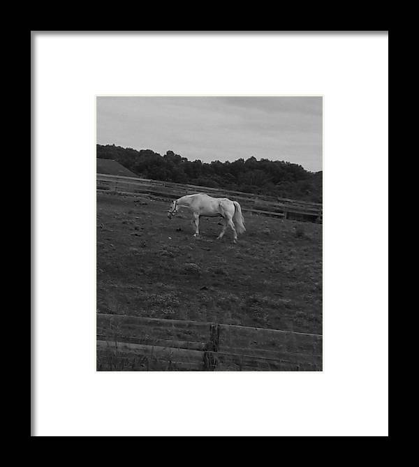 White Horse .. Framed Print featuring the photograph Whitehorse by Sheryl Eisner