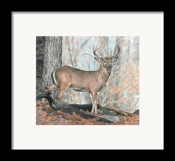 Deer Framed Print featuring the drawing Whitetail Buck by Carla Kurt