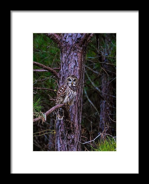 Wildlife Framed Print featuring the photograph Who Are You Looking At by Alicia Collins